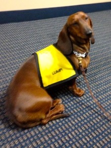 Lumpi the dog volunteers at Upstate.