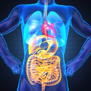 The pancreas is behind the stomach.
