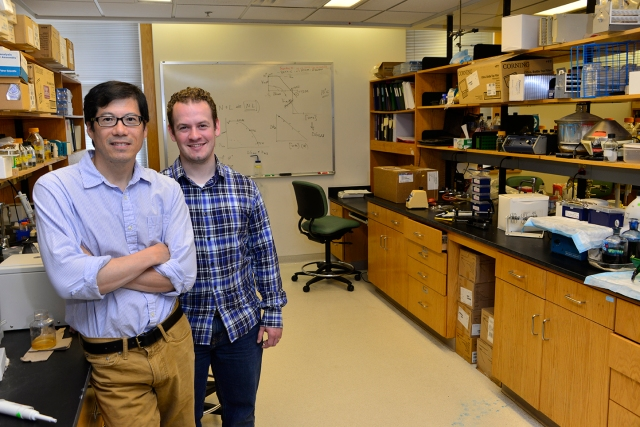Stewart Loh, PhD (left), and Adam Blander in the lab where they are developing an experimental cancer drug that, in 10 years, may be used to repair a gene that is implicated in about half of all cancers. (PHOTO BY WILLIAM MUELLER)
