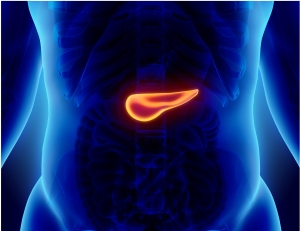 Outside of New York City, Upstate is the only institution in the state that the National Pancreas Foundation has designated as an NPF Center for the Care and Treatment of Pancreatic Disease. The illustration above shows the pancreas's location in the body.