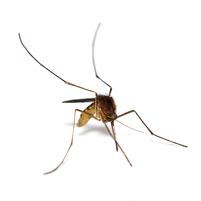 Controlling mosquitoes is crucial to controlling diseases spread by the insects, such as malaria, or, closer to Central New York, eastern equine encephalitis.
