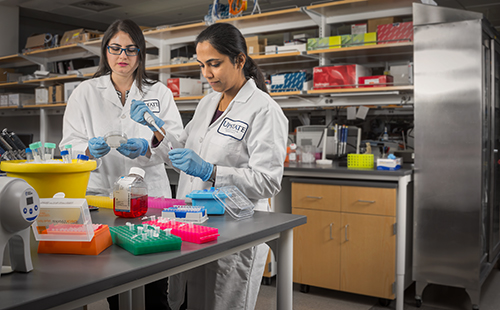 Biological assays, or bioassays, are tests of the effectiveness of a chemical or drug to fight cancer or other diseases by using tissue samples, plants or animals, such as lab mice. Above, from left, research fellow Lina Barrera Arenas and senior research support specialist Prajna Behera work on some samples. (PHOTO BY ROBERT MESCAVAGE)
