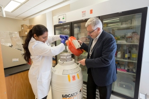 Disharee Das, left, a doctoral student in biochemistry and molecular biology, puts a cell sample into a liquid nitrogen tank with help from her mentor, Kotula. (PHOTO BY WILLIAM MUELLER)