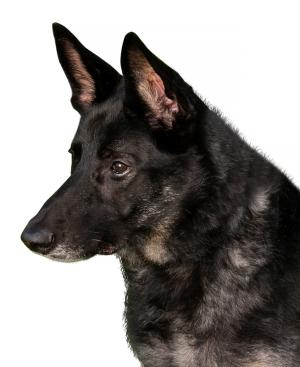Sasha, Jackie Warren-Moore's dog
