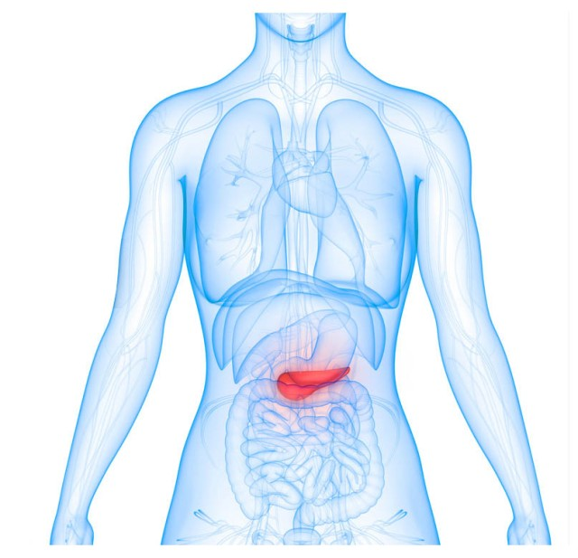 The pancreas is shown in red.