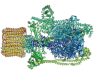 Science Is Art: A close-up look at an enzyme