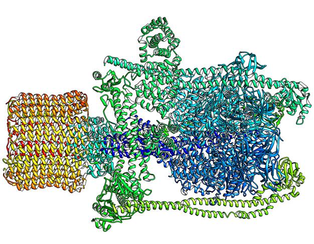 V-ATPases enzyme