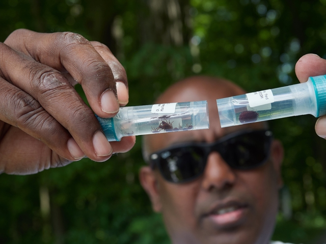 Saravanan Thangamani, PhD, shows test tubes of ticks harvested from other parts of the world, so his research team can compare them to ticks found in Central New York. (photos by Chuck Wainwright)