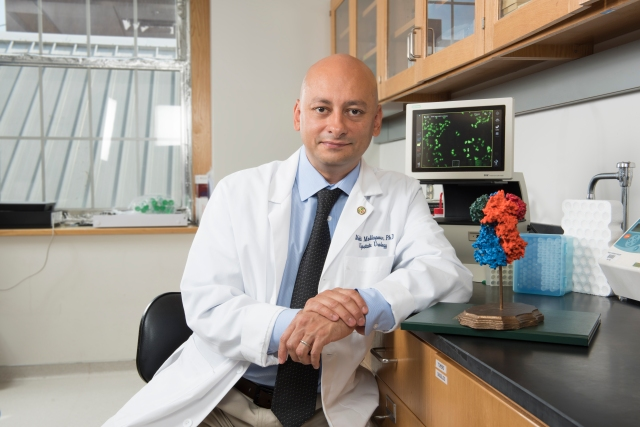 Mehdi Mollapour, PhD, is looking at ways to make anti-cancer medications more powerful. He's seated next to a 3-D print of the cancer chaperone, Hsp90 protein. (photo by Susan Kahn)
